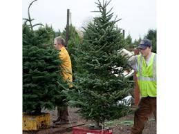 where can you buy a real tree around troy troy mi patch