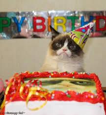 Cat Meme Maker - grumpy cat birthday meme generator imgflip