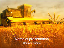 wheat field powerpoint template u0026 backgrounds id 0000000586