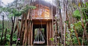 file tree house jpg tree house in hawaii popsugar smart living