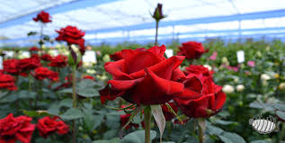 cut flowers ornamental plants types of floral bouquets