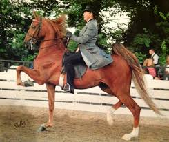 Cape Cod Horseback Riding American Saddlebred Horse With Renee Biggins Riding Saddleseat