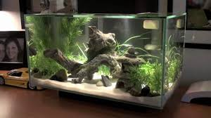 Beautiful Home Fish Tanks by Awesome Fish Tank Idea Awesome Ideas For You 6748