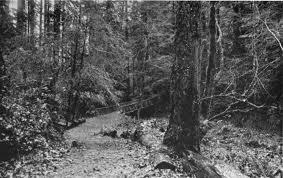 portland native plant list forest park portland oregon wikiwand