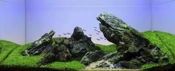 Mountain Aquascape An Aquascape Of Small Simple Aquatic Tanks Ii