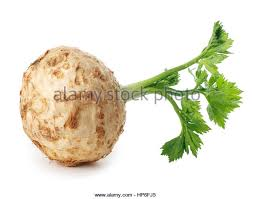 Celery Root Vegetable - celeriac vegetable plant food cut out stock images u0026 pictures alamy