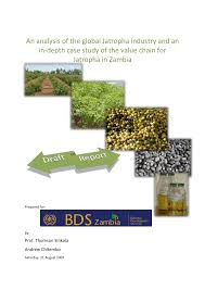jatropha wikipedia jatropha global industry analysis and case study of its value