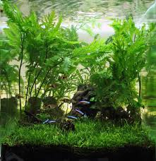 Nano Aquascaping Freshwater Fish How The Tiniest Fish Pack The Biggest Punch