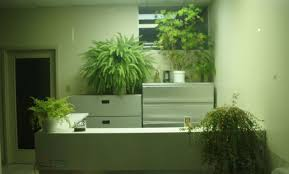 plant office planters pretty fake trees for office u201a awesome
