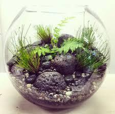 51 best bioattic terrariums images on pinterest terrariums
