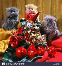 festive new year u0027s christmas composition three persian kittens