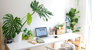 Plants For Office Greenery At Work Place Gives Enchanted Work Experience Natural