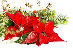 red poinsettia christmas flower with golden decoration card
