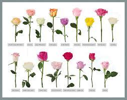 wholesale fresh flowers wholesale fresh cut flower plants of various colors view