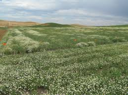 programs natural resources weeds and weed science tour gives public growers a look at problem plants