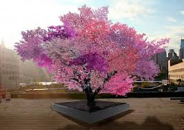 beautiful tree grows 40 kinds of fruit cnet
