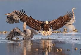 9 stunning bird photos win audubon contest