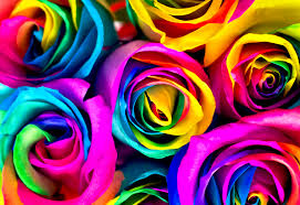 multicolored roses flowers to dye for how to make rainbow roses journal