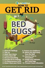 How To Get Rid Of Bugs In Kitchen Cabinets How To Get Rid Of Bed Bugs 13 Effective Chemical Free Tricks