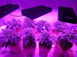what are the best led grow lights for weed you want to know about led grow lights