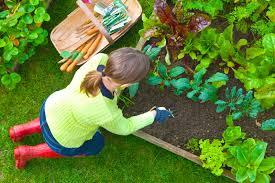 vegetable home garden plans for beginner gardener roy home design