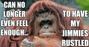 Baboon Meme - baboons ass meme google search cheeky pinterest meme