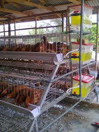 build a poultry house for layers with pictures poultry