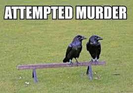 Attempted Murder Meme - attempted murder imgur