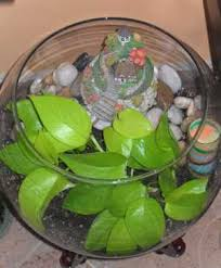 pictures of terrariums in recycled containers