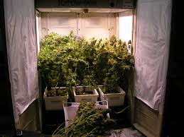 modular grow rooms put novices ahead of the game indoor grow