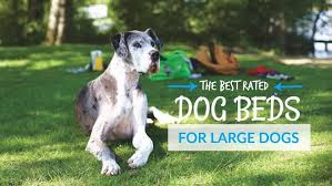 Dog Sofas For Large Dogs by Best Rated Dog Beds For Large Dogs For Extra Comfort And Support