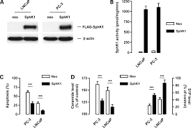 Anti Flag Antibody Chemosensitizing Effects Of Sphingosine Kinase 1 Inhibition In