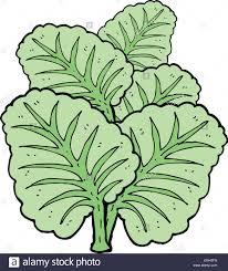 cartoon cabbage leaves stock vector art u0026 illustration vector