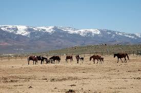 mustang ranch history programs and burro adoptions and sales adoption