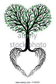 tree with roots cutout stock photos tree with roots cutout stock