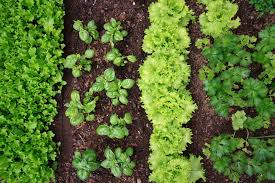 general vegetable garden care articles gardening know how
