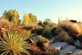 california native plant garden succulent design gardens by gabriel inc