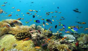 profile silver dollar aquarium negombo sri lanka tropical