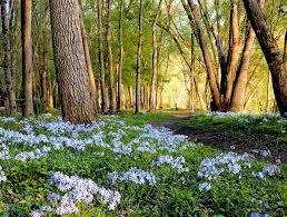 Maryland forest images New landowner incentives for forest management in effect jpg
