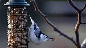 health update peanuts salmonella and backyard birds all about