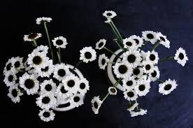 Blumen Bade Basteln Malen Kuchen Backen Blumen Schwarz Weiss