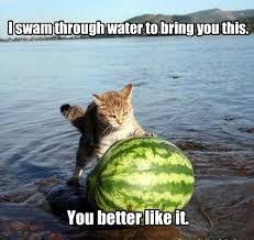 Funny Animal Memes Tumblr - funny memes tumblr animals image memes at relatably com