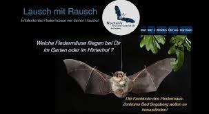 Noctalis U2013 Welt Der Fledermäuse
