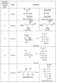 monosaccharides definition structure u0026 examples video u0026 lesson