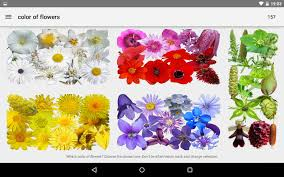 Photos Of Flowers What U0027s That Flower Android Apps On Google Play