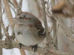 Ontario Backyard Birds 45 Best Birds In Our Backyard Images On Pinterest Backyard