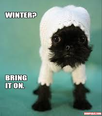 Funny Winter Memes - a puppy winter clothes dump a day