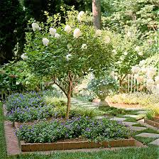 Plants For Patios In The Shade Choose The Best Hydrangeas For Your Garden
