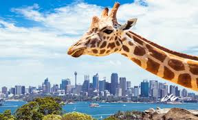 Taronga Zoo Christmas Party - you can win tickets to taronga zoo u0027s epic 100th birthday bash