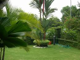 fascinating green backyard landscape ideas with amusing fence and